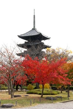 紅葉が美しい「東寺の五重塔」