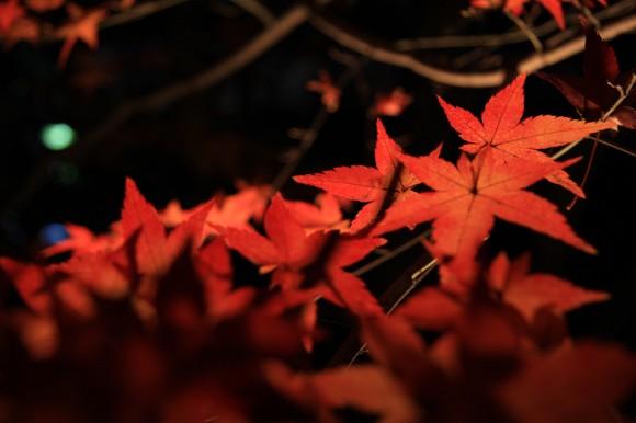 永観堂のライトアップされた紅葉