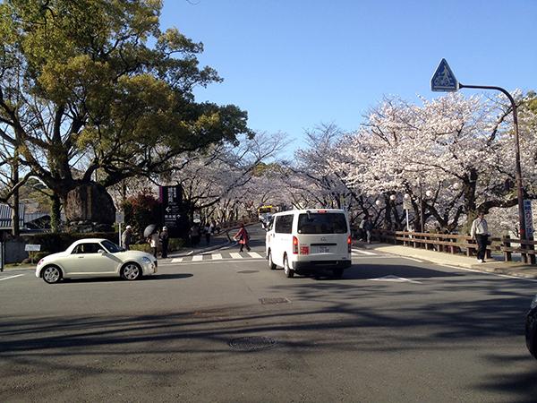 熊本城まで歩く坂道には桜が満開