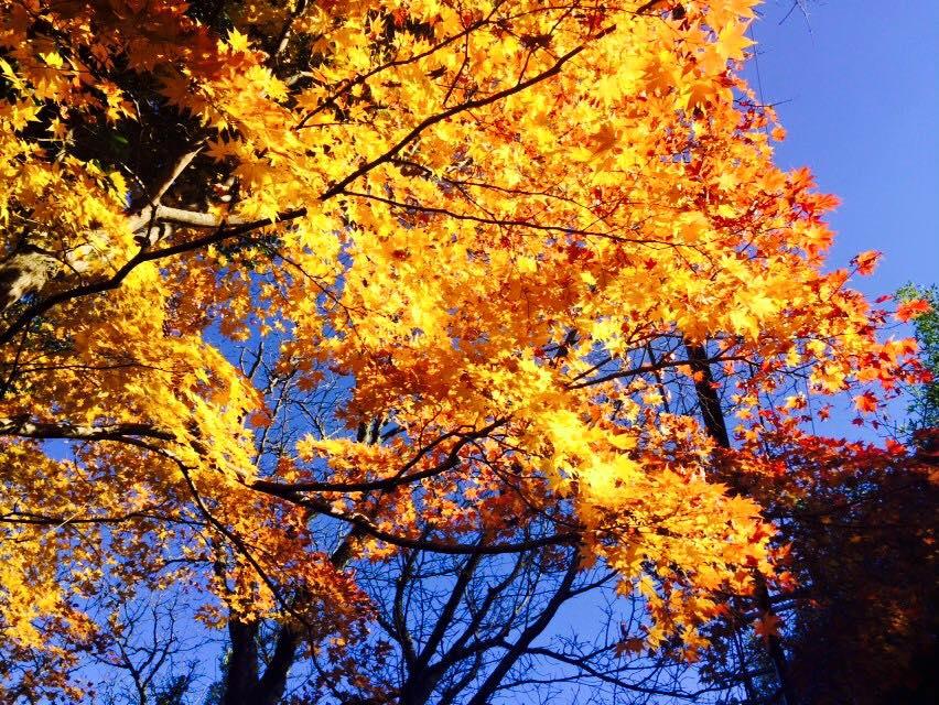 arashiyama09