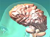 記憶力アップする脳