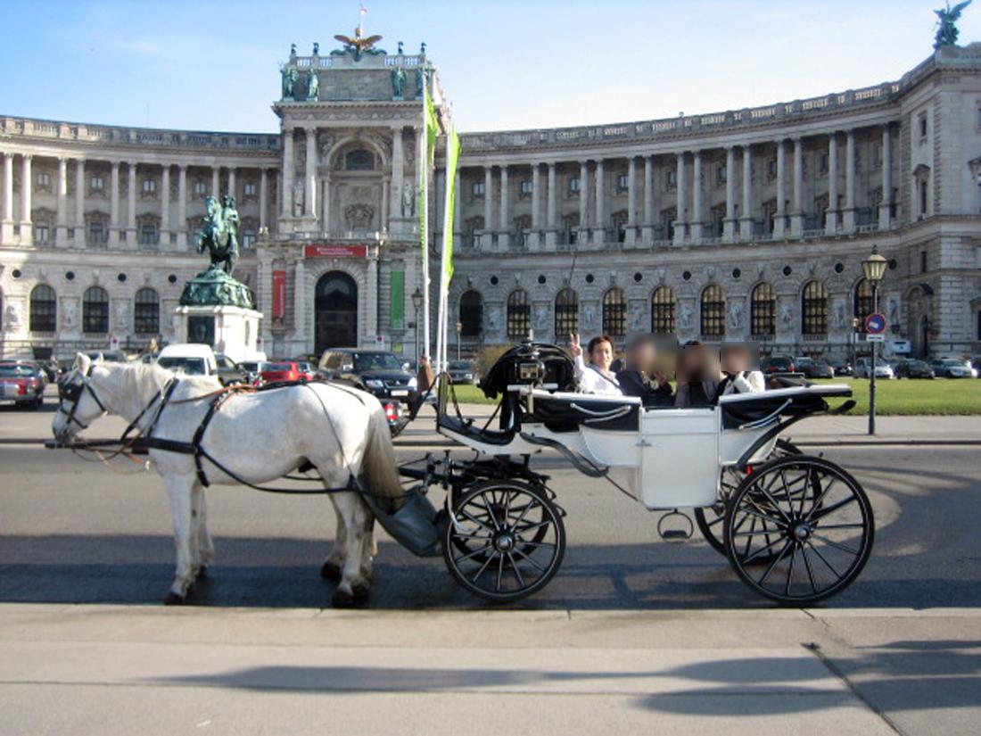 いろんな馬車から白馬を選びました