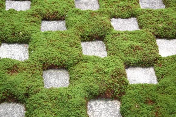 方丈の北にある市松の庭