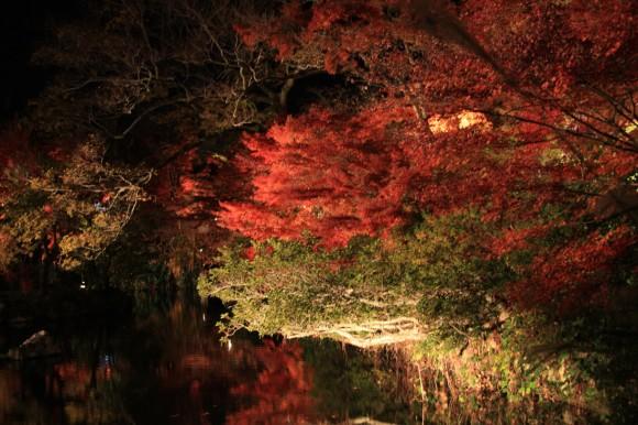 池に反射している紅葉が伝わる?