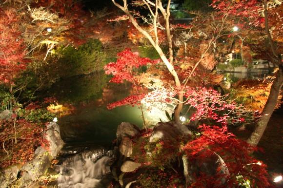 ライトアップされた池と紅葉