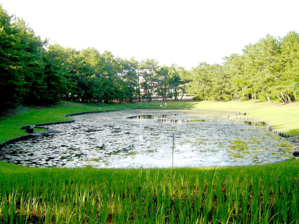 蓮の葉が池に浮かび、神秘的な雰囲気を演出