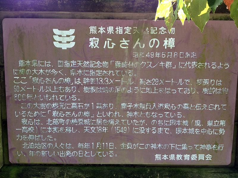寂心さんご神木 (9)